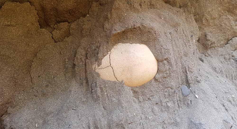 Aparece un cráneo en las obras que está ejecutando Red Eléctrica de España en la calle Juan Rejón