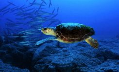 El Gobierno aprueba las estrategias marinas, que garantizan el buen estado ambiental de nuestros mares antes de 2020