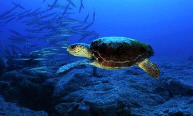 Tiburones, tortugas y pingüinos nadan en círculo de manera similar