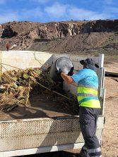 El servicio de limpieza retira unos 8 mil kilos de cañas y restos vegetales de la playa de El Confital arrastrados por el mar tras las intensas lluvias