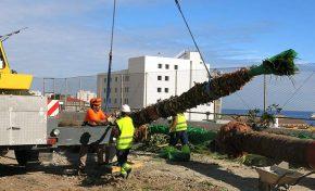 El Ayuntamiento traslada los árboles de Blas Cabrera Felipe para renovar las zonas verdes del paseo (contenido patrocinado)