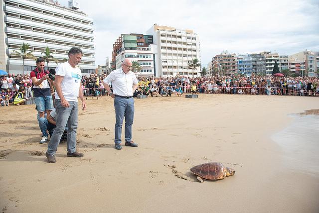 El Cabildo grancanario devuelve cinco tortugas al mar en el marco del Womad