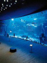 Un año de Poema del Mar, el gran acuario de Las Palmas de Gran Canaria