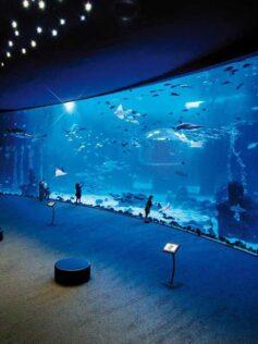 """Tras la apertura a los peatones de la pasarela del istmo debería estar abierto el acuario """"Poema del Mar"""""""