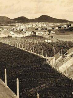 Bajada del Barranco de la Ballena hacia Las Canteras en los años 50