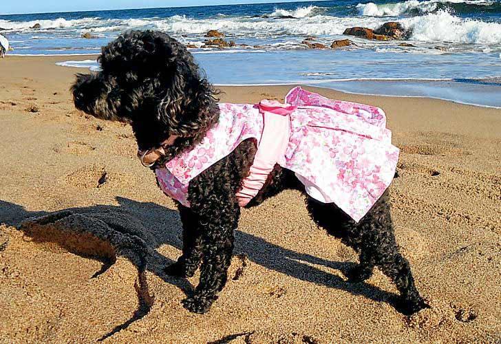 Podrás traer a tu perro a Las Canteras si este viene en bañador o bikini