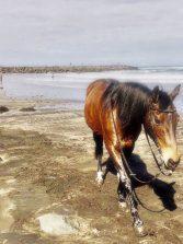 Un caballo pasea por la playa de la Cicer