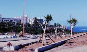 Finaliza el trasplante de 25 árboles de Blas Cabrera Felipe (contenido patrocinado)