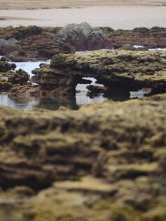 A las rocas