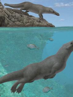La ballena que viajó a cuatro patas hasta llegar al Pacífico