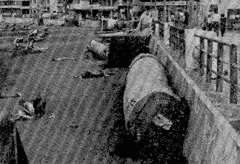 Cuando aparecieron dos enormes troncos en Las Canteras