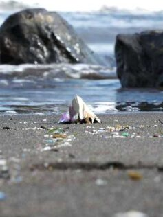 """Proyecto """"La arena de nuestras playas"""": el 60% de la costa canaria tiene microplásticos y también colillas"""