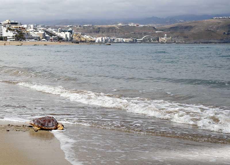Suelta de tortugas por el Womad 2019
