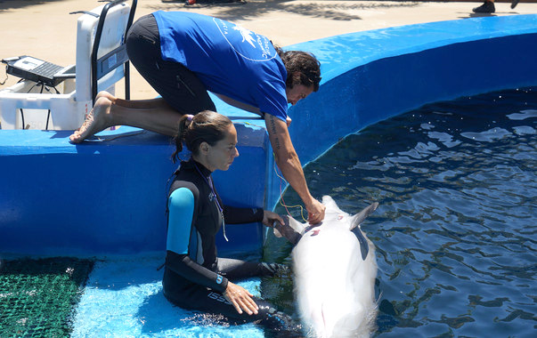 Los delfines regulan cada latido del corazón mientras bucean