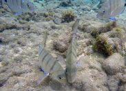 El maravilloso acuario de Las Canteras