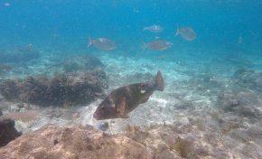Ama el mar, ama la naturaleza, lucha por la vida