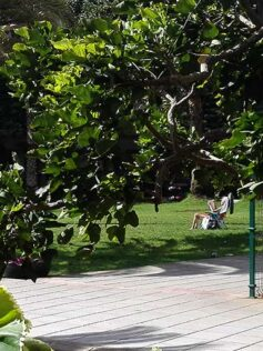No es Hyde Park en verano pero como si lo fuera