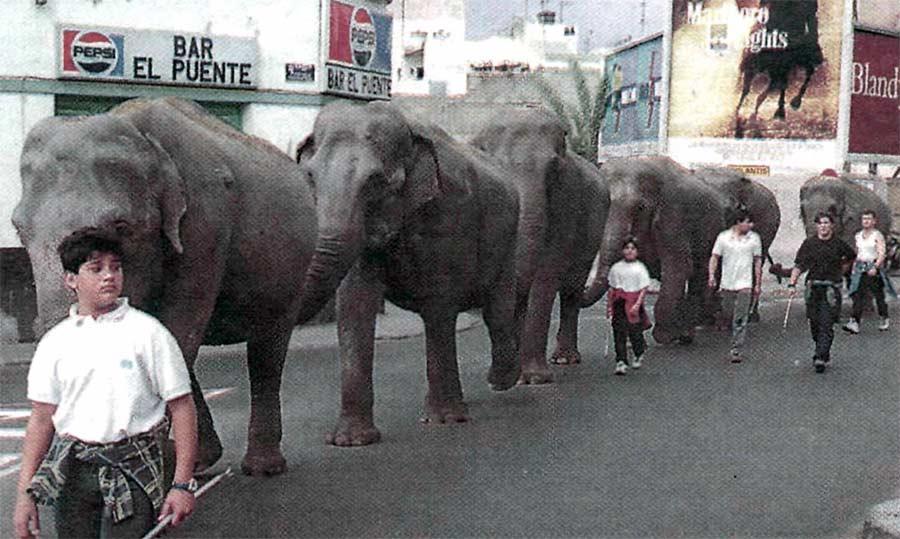 Cuando los elefantes pasearon por Guanarteme