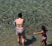 La niña y los peces