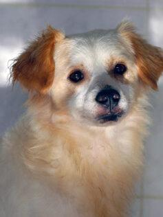 """Este sábado en el Miller exhibiciones caninas, pasarela de adopción, charlas en la Feria """"Amigo Can LPGC"""""""