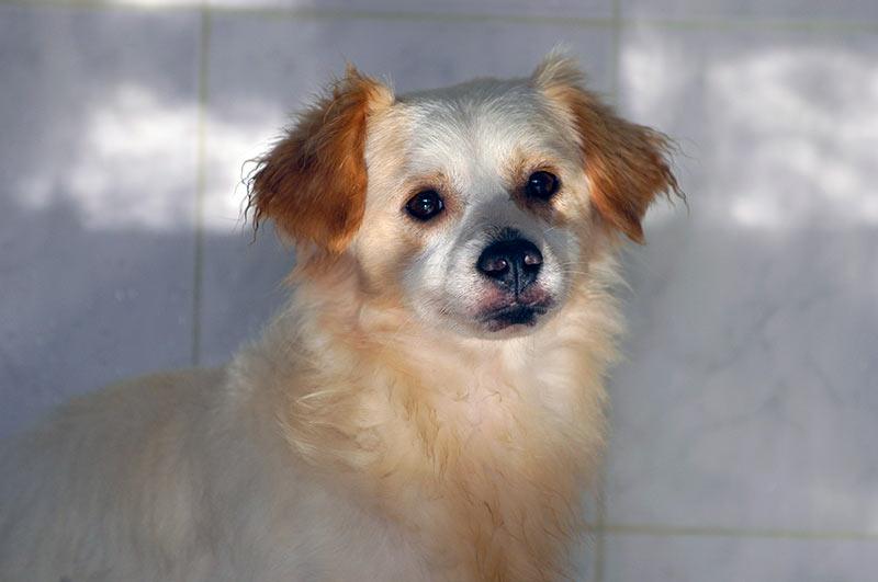 Este sábado en el Miller exhibiciones caninas, pasarela de adopción, charlas en la Feria «Amigo Can LPGC»