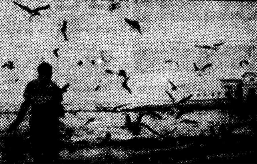 """Francisco Sosa Morales. Un personaje para la película """"Los Pájaros"""""""