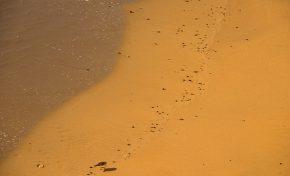 La orilla de la marea