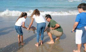 Una tortuga rescatada en El Confital vuelve al mar