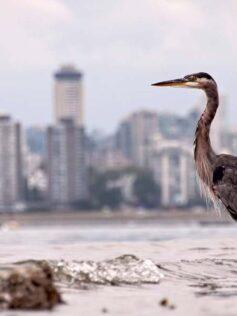 El confinamiento transforma las ciudades en un oasis efímero para los animales