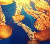 El declive de la biodiversidad marina tropical empeorará a finales de siglo
