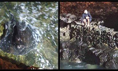 Denuncian la pesca furtiva de chuchos en La Puntilla. Vídeo
