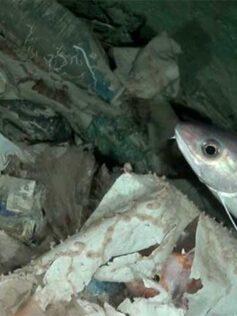 El 99% del plástico termina en las profundidades marinas de Europa, según un informe de la organización Oceana