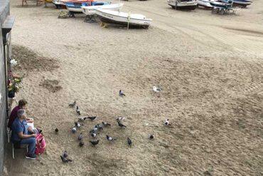 ¿Por qué las palomas representan un riesgo importante para la salud?