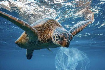 El océano Atlántico tiene más microplásticos que los que se creía