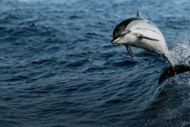 ¿Cuántos años tiene un delfín?