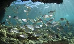 """National Geographic destaca a Las Canteras como """"un paraíso repleto de biodiversidad"""""""