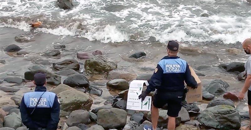 La policía local «rescata» las crías de un tarro canelo que apareció en la zona de Los Muellitos