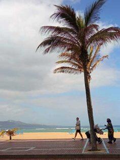 El Ayuntamiento de Las Palmas de Gran Canaria refuerza las medidas contra la Covid-19