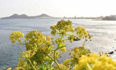 Una vista de la Bahía de El Confital