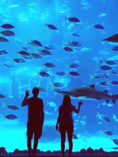 El acuario Poema del Mar reabrirá el 1 de mayo