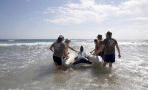 Voluntarios realizan un simulacro de varamiento masivo de cetáceos y emplean un pontón de rescate