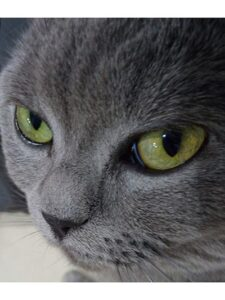 Cuento de verano «La gata Felisa»