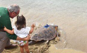 La tortuga curada y recuperada en el acuario Poema del Mar vuelve a su océano