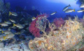 Huida, acidificación y sepultura: así se enfrenta la biodiversidad marina a la lava