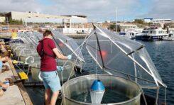 Investigadores canarios e internacionales estudian el potencial del océano como aliado contra el cambio climático